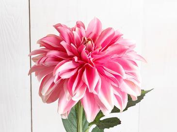 Dahlia Изкуствено Цвете 77 См Розово