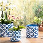 Garden Flowers Flowerpot Lacivert