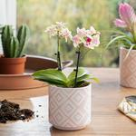 Floral Garden Flowerpot Pembe