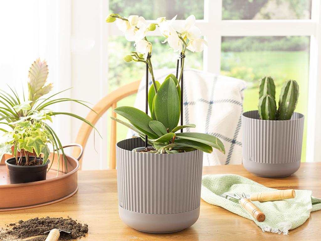 Bloom Plastic Flowerpot 16x16x15 Cm Antrachite