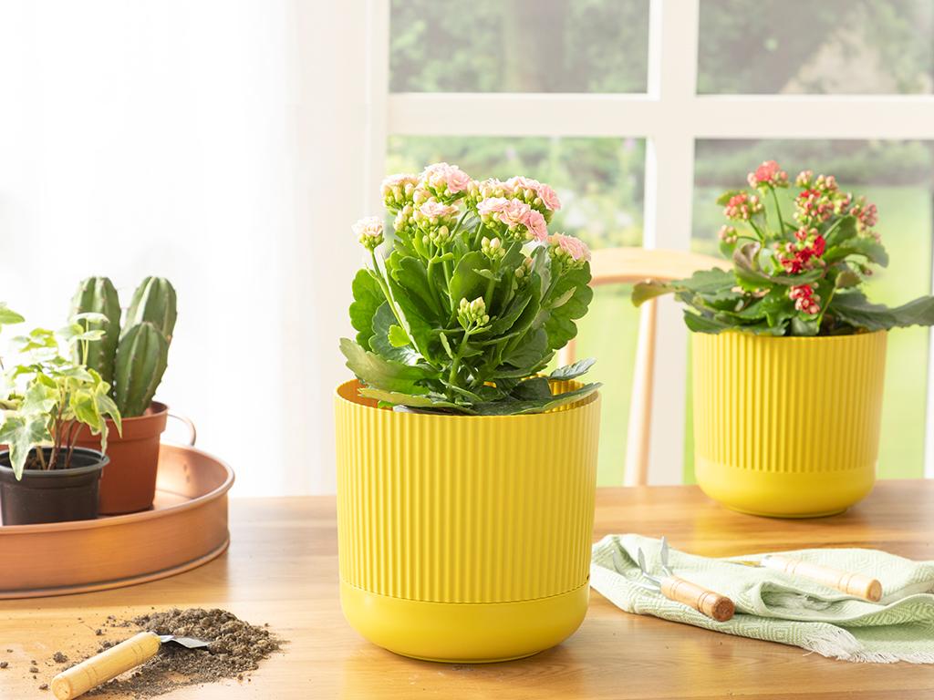 Bloom Plastik Saksı 18x18x16 Cm Zeytin Yeşili